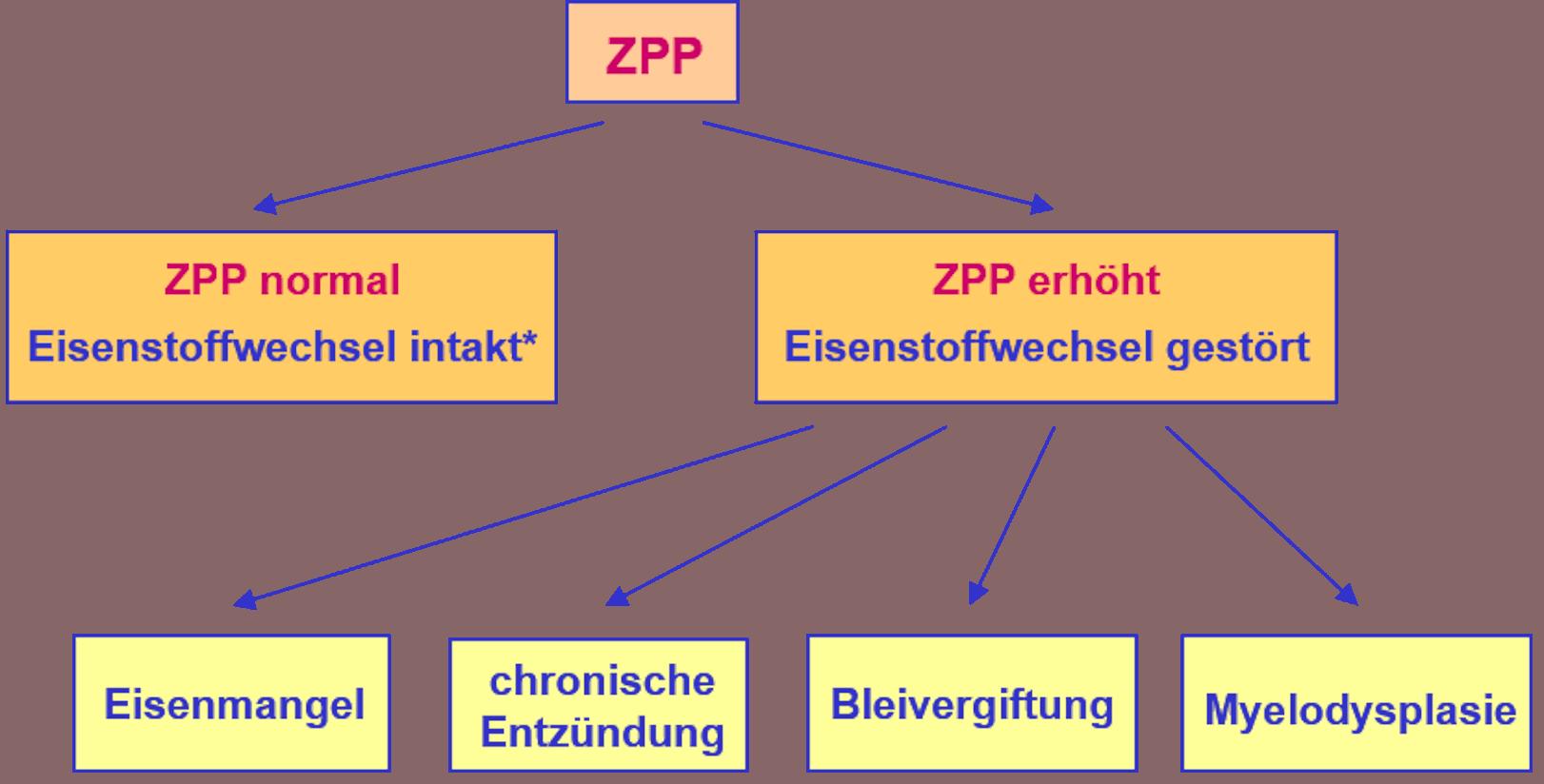 ZPP als Screeningparameter des Eisenstoffwechsels